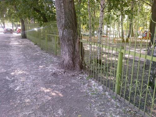 Тюмень. Дерево с забором